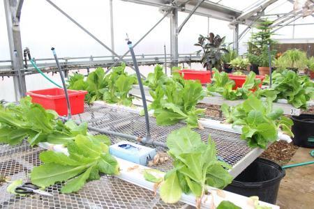 CFISD Nutrition Services Utilize Greenhouses Fresh Produce